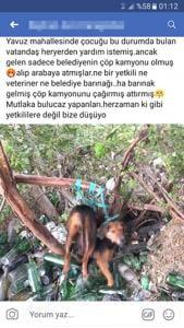 Köpeğe tecavüz