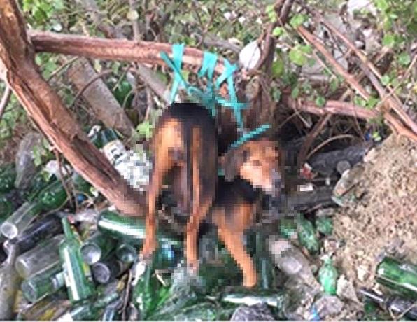Photo of Köpeğe tecavüz iddiası ortalığı karıştırdı.